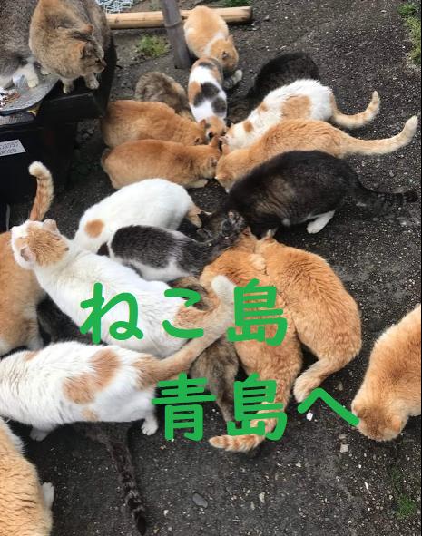 "img src=""puppy.jpg"" alt=""ねこ島の青島"""