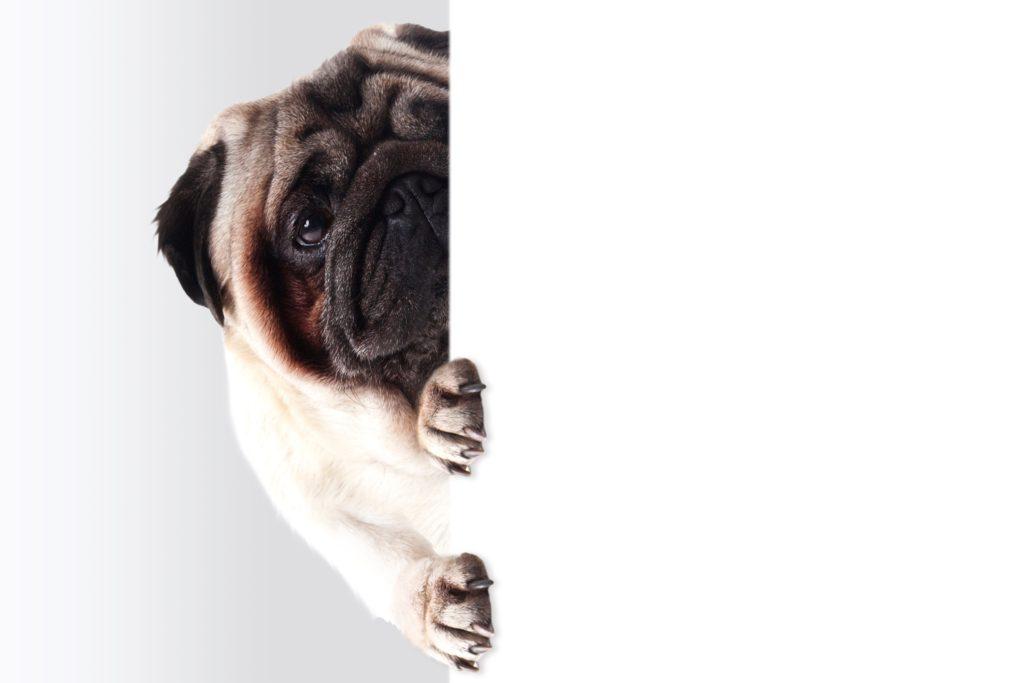 "img src=""puppy.jpg"" alt=""日商簿記2級合格"""