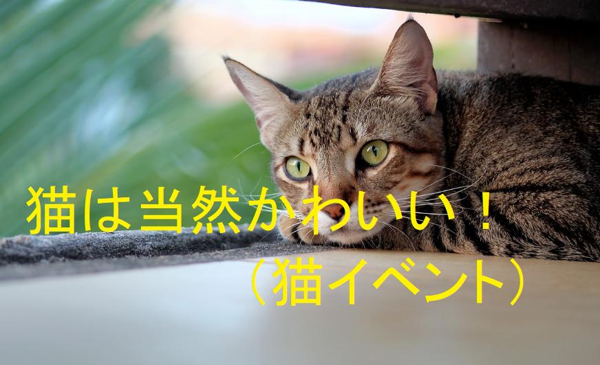 """img src=""""puppy.jpg"""" alt=""""ねこがかわいいだけ展"""""""